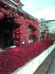 定点で去年の紅葉です