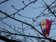 桜祭りの準備はばっちり