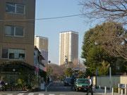 谷中五重塔跡桜並木
