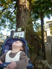 大きな樹だな~