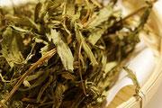 甜菊叶茶(ステビア)