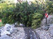 August - Baum fällt!