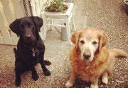 Tierernährungsberatung-Wuff&Meow-Hunde