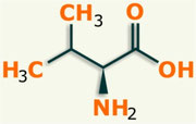 Valina aminoácido