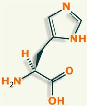 Histidina aminoácido
