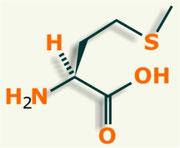 Metionina aminoácido