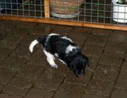 Charly findet auch Regen spannend.