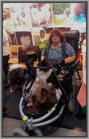 Ausgebildete Therapie Hunde.  Besitzerin Marion Reichert mit ihren Spitzen von der Arnold's Eiche.