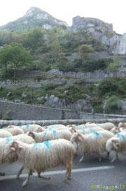 sous le regard du Fort du Portalet ; des moutons, pas de prison !