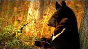 Природа России в видеообозрении
