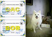 dog shows, results, Japanese Spitz, SIMBA TSAR ZVEREI, Ukraine, 2016, Cherkassy, CAC, BOB