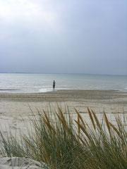 Traversée de la baie de somme, découverte des phoques en Baie de Somme©Découvrons la Baie de Somme