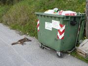 Muoiono anche le volpi.