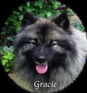 Wolfsspitzhündin Gracie von der Römerroute