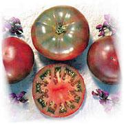 Cherokee Tomate