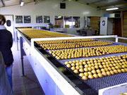 Visite d'une usine de fabrication de madeleines