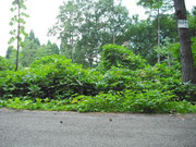 長野県上水内郡、野尻湖に隣接する別荘地