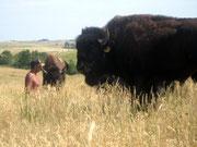 Edward Iron Cloud bei seinen Büffeln