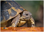 Expo PhotoTortue d'Hermann
