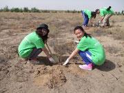 乾燥地でも育つ樹種を選んで植林