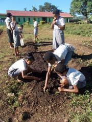 学校の敷地内で野菜を育て始めました
