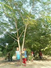 植樹後3年が経ち、子どもたちの背丈よりもはるかに高くなりました。