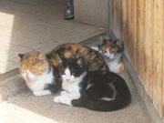 Unsere Katzen beim wohlverdienten Mittagsschlaf