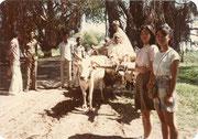 農村を走る牛車