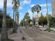 鹿児島大学キャンパス。今見るとやはり南国っぽいですね。