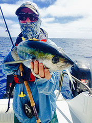 Yellowfin Tuna caught  fly fishing off San Diego