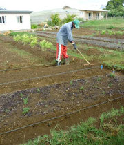 Organic Farming - land Preparation