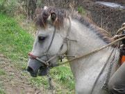 利家公の御馬ではありません!