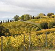 Vigne Taron, IGP Comté Tolosan (Vic-Bilh)
