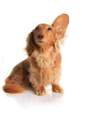 Hund hört was