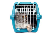 Katze im Transporter