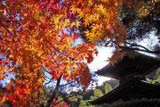 常寂光寺の秋