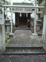 毎週末ご挨拶している調布の小さな神社。
