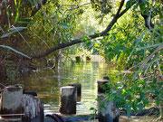 ワンドと本流をつなぐ水路