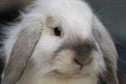 Fredy (mon lapin)