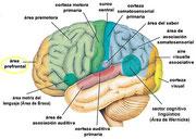 Fuente de imagen: Neurociencia y coaching