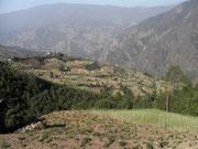 Contreforts de l'Himalaya, Nainithal, Népal