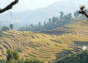 Tour du Manaslu, Népal