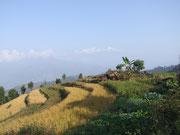 Cultures en terrasses, Syabru Besi, Langtang, Népal
