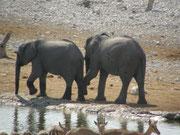 Safari mit Kindern