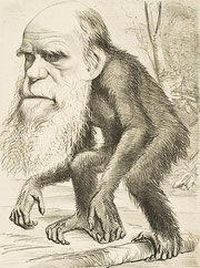 Die Evolution nach Darwin