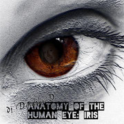 dj Double:D - Anatomy of the human eye: IRIS