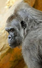 TUMBA - Krefelder Zoo