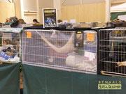Das Katzenheim auf Ausstellungen