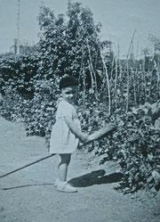 Enfant chevauchant un balai dans le très grand jardin potager  (années 50 dans le Calvados)