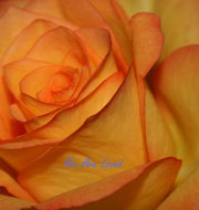 "Rose ""You Are Loved"""